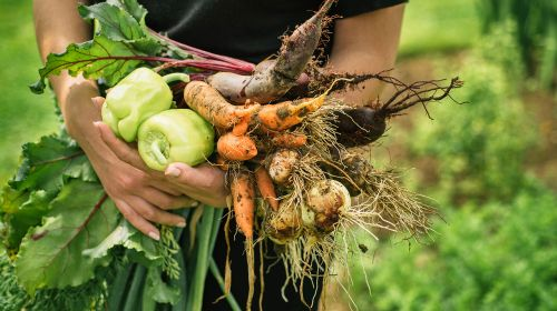 Brits increase their appetite for ethical food