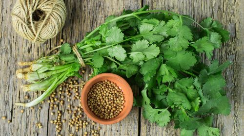 Carry On Coriander