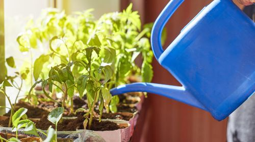 Turn Your Windowsill Into An Allotment